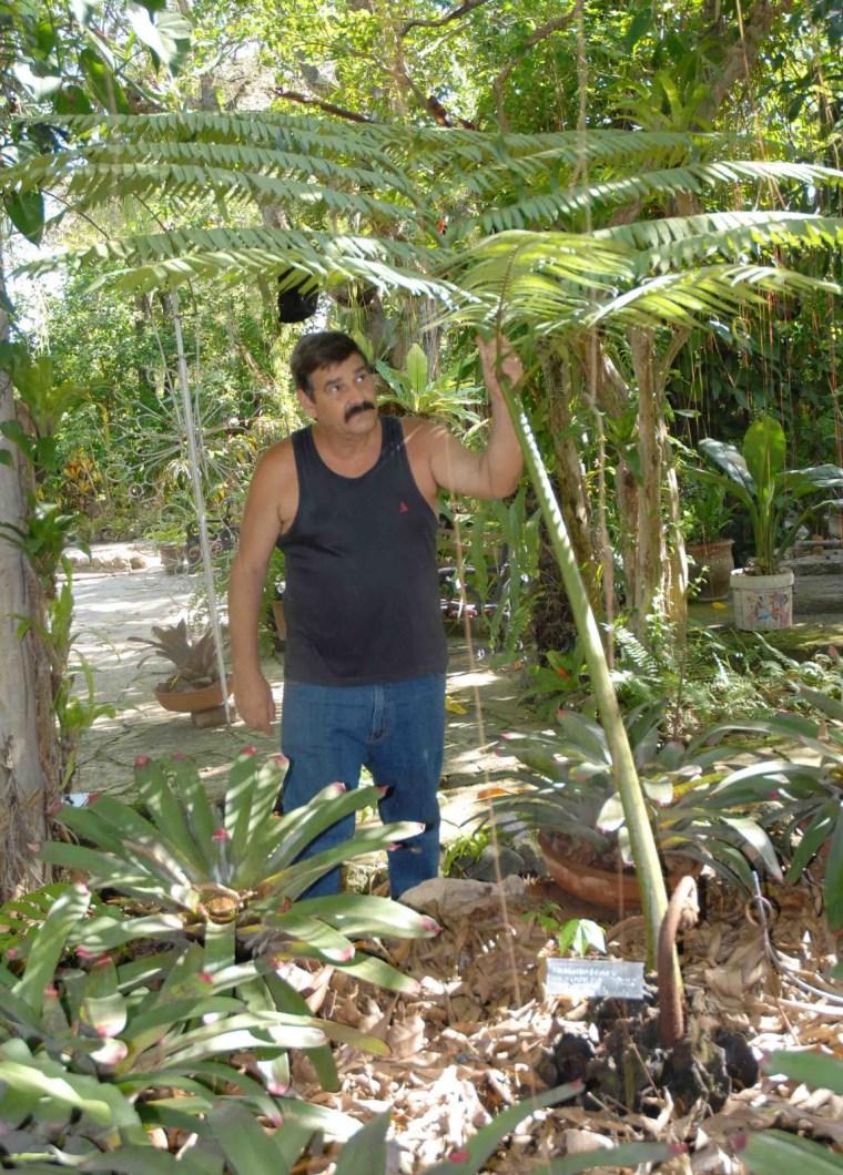 El jard n de los helechos de santiago de cuba donde el for Ver fotos de jardines