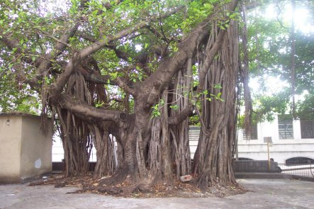 árboles de cuba_importancia de los árboles