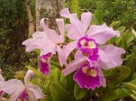 Coleccionista cubano rescata especies de plantas ornamentales for Matas ornamentales