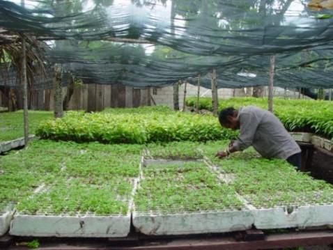 Comenz la campa a de viveros forestales en santiago de for Viveros en santiago maipu
