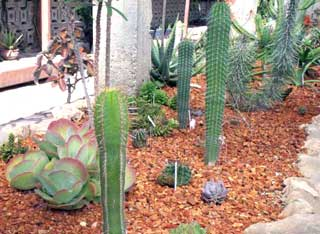 ciencia cubana_ciencia de cuba_cactus cubanos