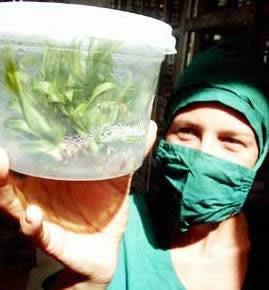 ciencia agrícola en Cuba