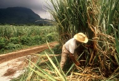 ETICA estación territorial de investigaciones de la caña de azúcar
