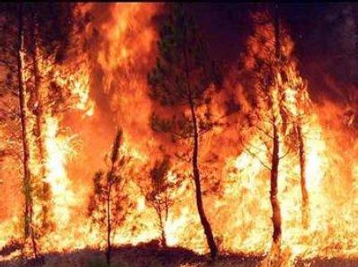 incendios forestales en cuba