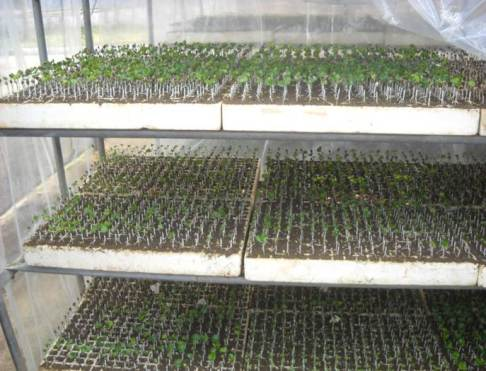 ciencia de cuba_ciencia cubana_estación experimental agroforestal de III frente (13)