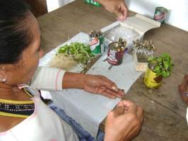 ciencia de cuba_ciencia cubana_estación experimental agroforestal de III frente (14)