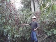 ciencia de cuba_ciencia cubana_estación experimental agroforestal de III frente (8)
