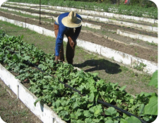 ciencia de cuba_ciencia cubana_Huertos Tecnificados_desarrollo sostenible en santiago de cuba