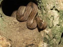 ciencia de cuba_ciencia cubana_Reserva Ecológica Siboney-Juticí_Cueva de los Majáes_Santiago de Cuba_2