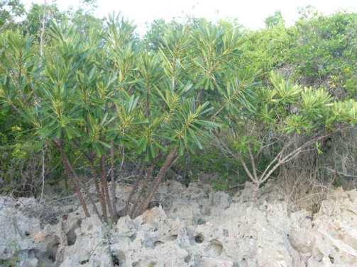 ciencia de cuba_ciencia cubana_Reserva Ecológica Siboney-Juticí_especies invasoras_Santiago de Cuba