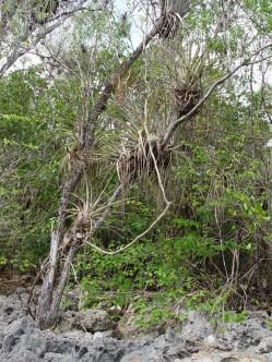 ciencia de cuba_ciencia cubana_Reserva Ecológica Siboney-Juticí_especies invasoras_Santiago de Cuba_2