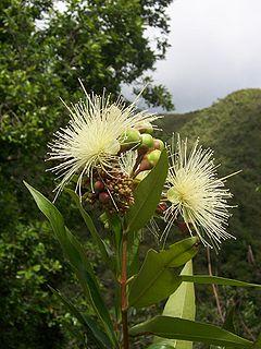 ciencia de cuba_ciencia cubana_especies botánicas invasoras exóticas en cuba_2