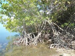 ciencia de cuba_ciencia cubana_III 3 tercer Taller Regional de Formación de capacidades para el manejo costero_municipio guamá (5)
