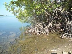 ciencia de cuba_ciencia cubana_III 3 tercer Taller Regional de Formación de capacidades para el manejo costero_municipio guamá (6)