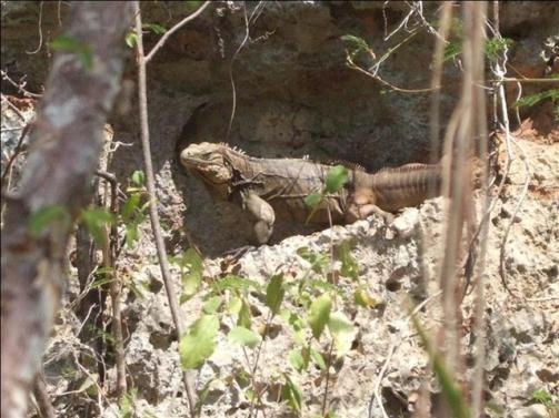 ciencia de cuba_ciencia cubana_Laboratorio Bioespeleológico Emil Racovitza_Reserva Ecológica Siboney Juticí (39)