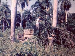 ciencia de cuba_ciencia cubana_Laboratorio Bioespeleológico Emil Racovitza_Reserva Ecológica Siboney Juticí (70)