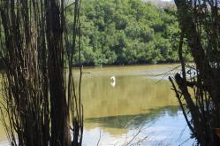 ciencia de cuba_ciencia cubana_manglares de cuba_santiago de cuba_III Taller Regional de Formación de Capacidades para el Manejo Costero (22)