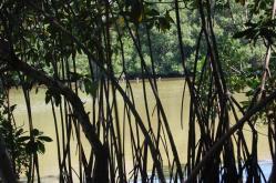 ciencia de cuba_ciencia cubana_manglares de cuba_santiago de cuba_III Taller Regional de Formación de Capacidades para el Manejo Costero (23)