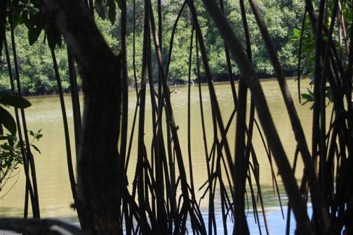 ciencia de cuba_ciencia cubana_manglares de cuba_santiago de cuba_III Taller Regional de Formación de Capacidades para el Manejo Costero (24)