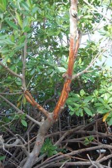 ciencia de cuba_ciencia cubana_manglares de cuba_santiago de cuba_III Taller Regional de Formación de Capacidades para el Manejo Costero (25)