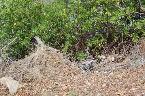 ciencia de cuba_ciencia cubana_manglares de cuba_santiago de cuba_III Taller Regional de Formación de Capacidades para el Manejo Costero (27)