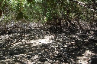 ciencia de cuba_ciencia cubana_manglares de cuba_santiago de cuba_III Taller Regional de Formación de Capacidades para el Manejo Costero (6)