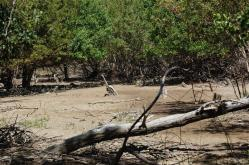 ciencia de cuba_ciencia cubana_manglares de cuba_santiago de cuba_III Taller Regional de Formación de Capacidades para el Manejo Costero (8)