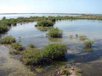 ciencia de cuba_ciencia cubana_península de Guanahacabibes_humedal_1