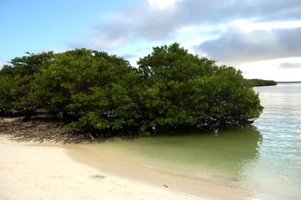ciencia de cuba_ciencia cubana_zonas costeras de cuba_protección de los paisajes marinos cubanos