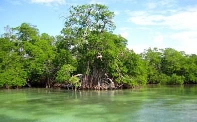 ciencia de cuba_ciencia cubana_zonas costeras de cuba_protección de los paisajes marinos cubanos_4