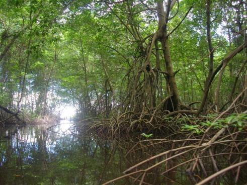 ciencia de cuba_ciencia cubana_zonas costeras de cuba_protección de los paisajes marinos cubanos_8