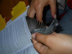 ciencia de cuba_ciencia cubana_anillamiento de aves en cuba_estación ecológica siboney juticí (21)