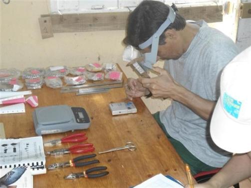 ciencia de cuba_ciencia cubana_anillamiento de aves en cuba_estación ecológica siboney juticí (6)