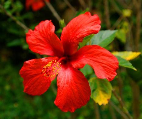 ciencia de cuba_ciencia cubana_plantas de cuba_1