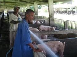 ciencia de cuba_portal de la ciencia cubana_uso del biogas en fincas agropecuarias (10)