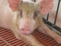 ciencia de cuba_portal de la ciencia cubana_uso del biogas en fincas agropecuarias (11)