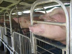 ciencia de cuba_portal de la ciencia cubana_uso del biogas en fincas agropecuarias (12)