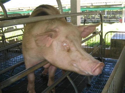 ciencia de cuba_portal de la ciencia cubana_uso del biogas en fincas agropecuarias (13)