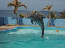 ciencia de cuba_portal de la ciencia cubana_acuario de baconao_reserva de la biosfera baconao (10)
