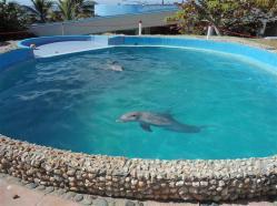 ciencia de cuba_portal de la ciencia cubana_acuario de baconao_reserva de la biosfera baconao (4)