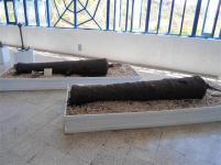 ciencia de cuba_portal de la ciencia cubana_acuario de baconao_reserva de la biosfera baconao (44)