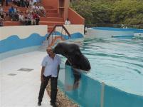 ciencia de cuba_portal de la ciencia cubana_acuario de baconao_reserva de la biosfera baconao (70)