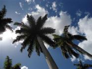 ciencia de cuba_portal de la ciencia cubana_protección de especies cinegéticas (1)