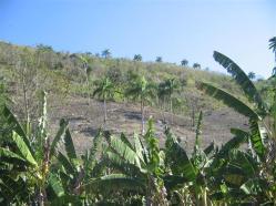 ciencia de cuba_portal de la ciencia cubana_protección de especies cinegéticas (17)