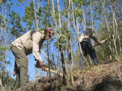 ciencia de cuba_portal de la ciencia cubana_protección de especies cinegéticas (20)