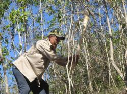 ciencia de cuba_portal de la ciencia cubana_protección de especies cinegéticas (21)