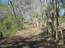 ciencia de cuba_portal de la ciencia cubana_protección de especies cinegéticas (27)