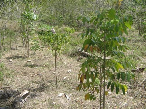 ciencia de cuba_portal de la ciencia cubana_protección de especies cinegéticas (34)