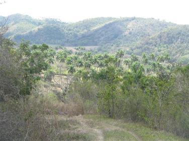 ciencia de cuba_portal de la ciencia cubana_protección de especies cinegéticas (35)