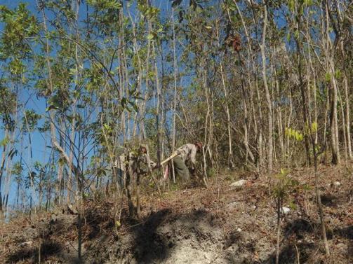 ciencia de cuba_portal de la ciencia cubana_protección de especies cinegéticas (48)
